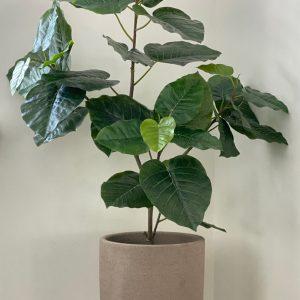 Plantcreatie 102